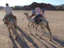 Mega safari excursion quad biking, camel ride, lunch, and water sports from sharm el sheikh