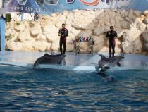 dolphin show excursions in sharm el sheikh