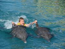 swimming with dolphins excursion in sharm el sheikh