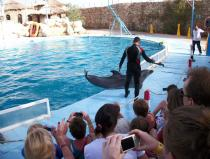 Dolphin show excursion